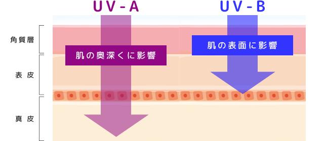 紫外線によるメラニンの生成の解図