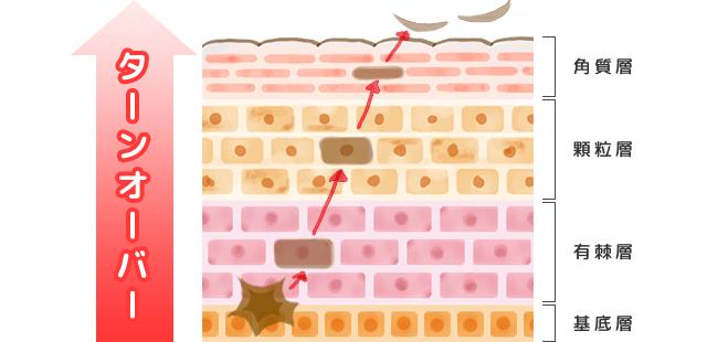 ターンオーバーの解図