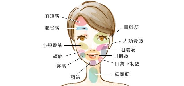 小顔ケア,筋肉の種類